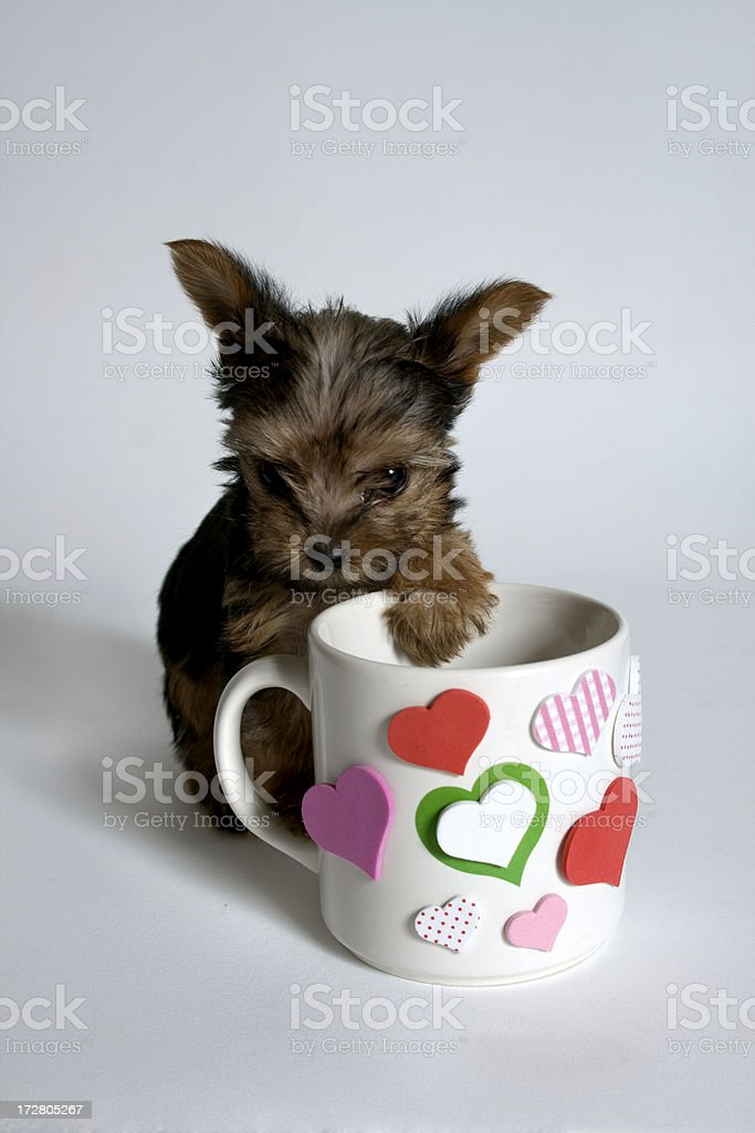 do you want a coffee royalty-free stock photo