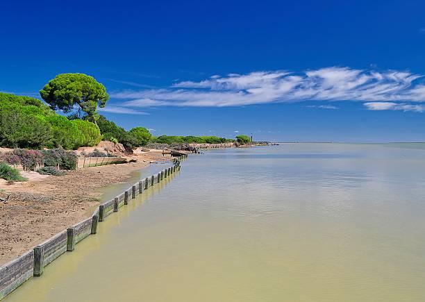 Doñana park stock photo