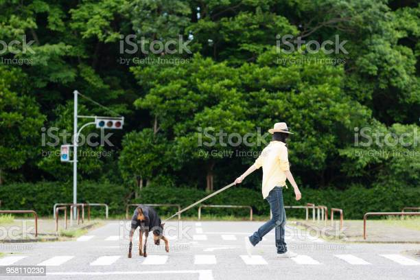 Doberman and a woman walking on an intersection picture id958110230?b=1&k=6&m=958110230&s=612x612&h=qyeapenkddgoo6 qr2f6b ww2htkkcxecmbtnlrxlhe=