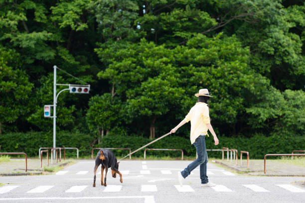 Doberman and a woman walking on an intersection picture id958110230?b=1&k=6&m=958110230&s=612x612&w=0&h=n q13r xvrgjamhucts 6hyfmtjtchxpwhh6nhi7neu=
