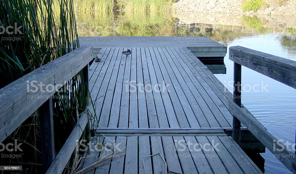dock with a duck royalty-free stock photo