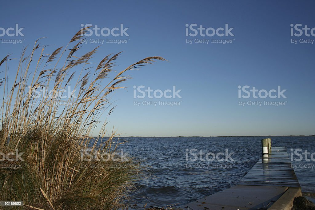 Dockside Reeds royalty-free stock photo