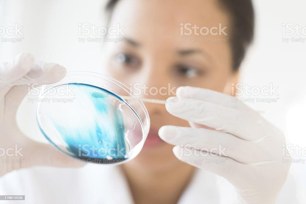 Doctor Analyzing Solution In Petri Dish At Laboratory stock photo