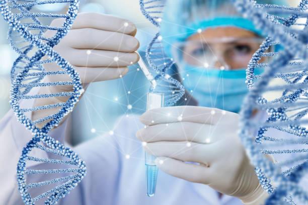 médico realiza el examen y el estudio de adn. - investigación genética fotografías e imágenes de stock