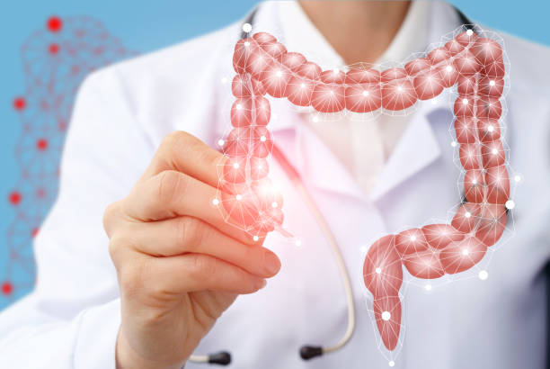 Doctor draws the structure of the colon on a screen. stock photo