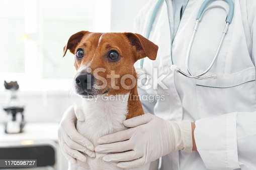 istock Doctor embrace of scared dog with love 1170598727