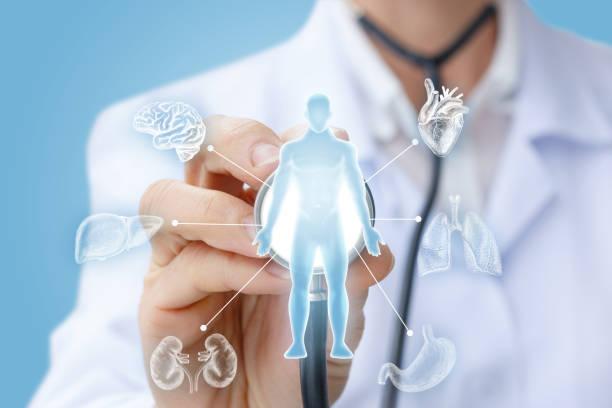 arzt untersucht die inneren organe. - herz lungen training stock-fotos und bilder