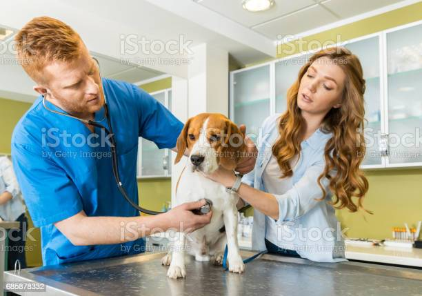 Doctor examining beagle dog with woman assistant picture id685878332?b=1&k=6&m=685878332&s=612x612&h=pegmu3ecmdpc2mtsvda2lhwgf yznzzaky1eosmmj1a=