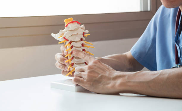 doctor explaining about spine to the patient - chiropractic care stock photos and pictures