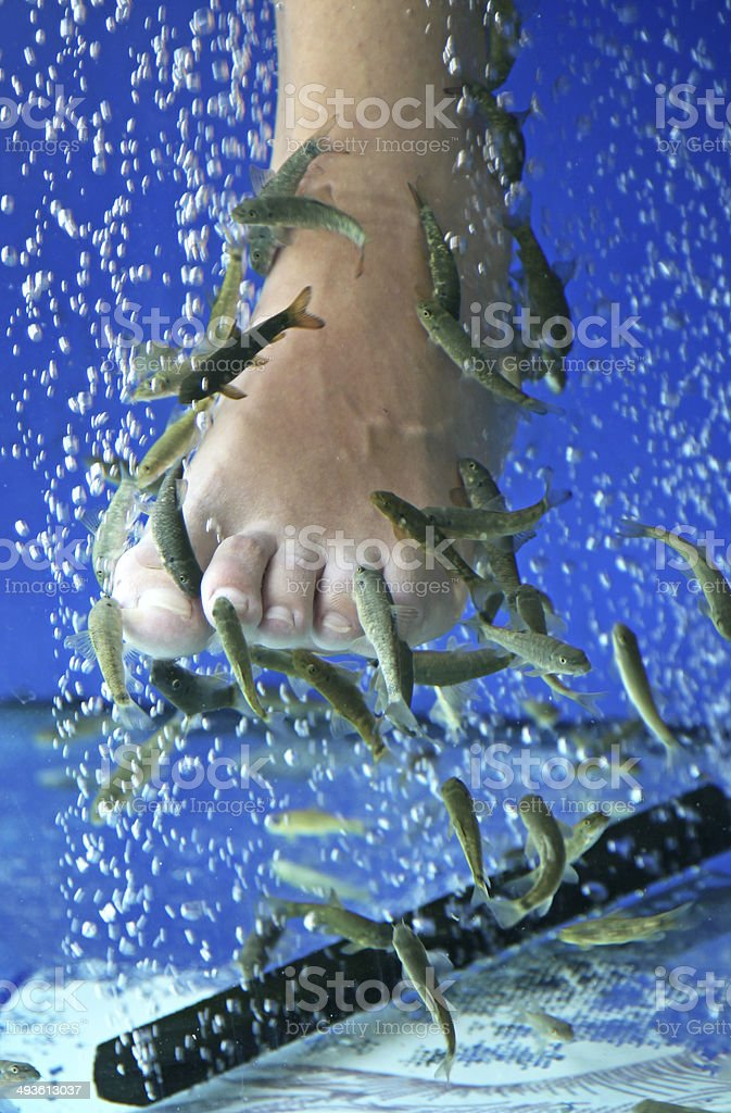 Doctor fish - fisha spa stock photo