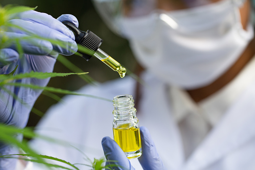 1177762728 istock photo Doctor hand hold cannabis oil, Research of hemp oil extracts for medical purposes 1256951421