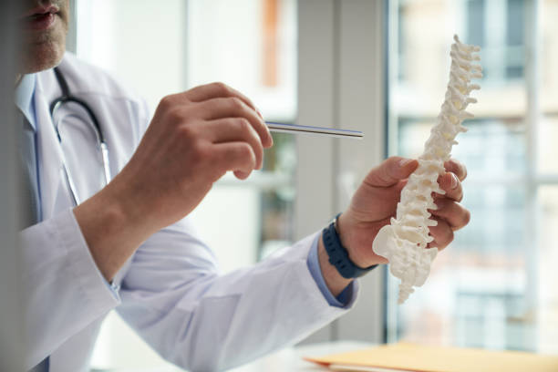 Doctor holding a model of a human spine stock photo
