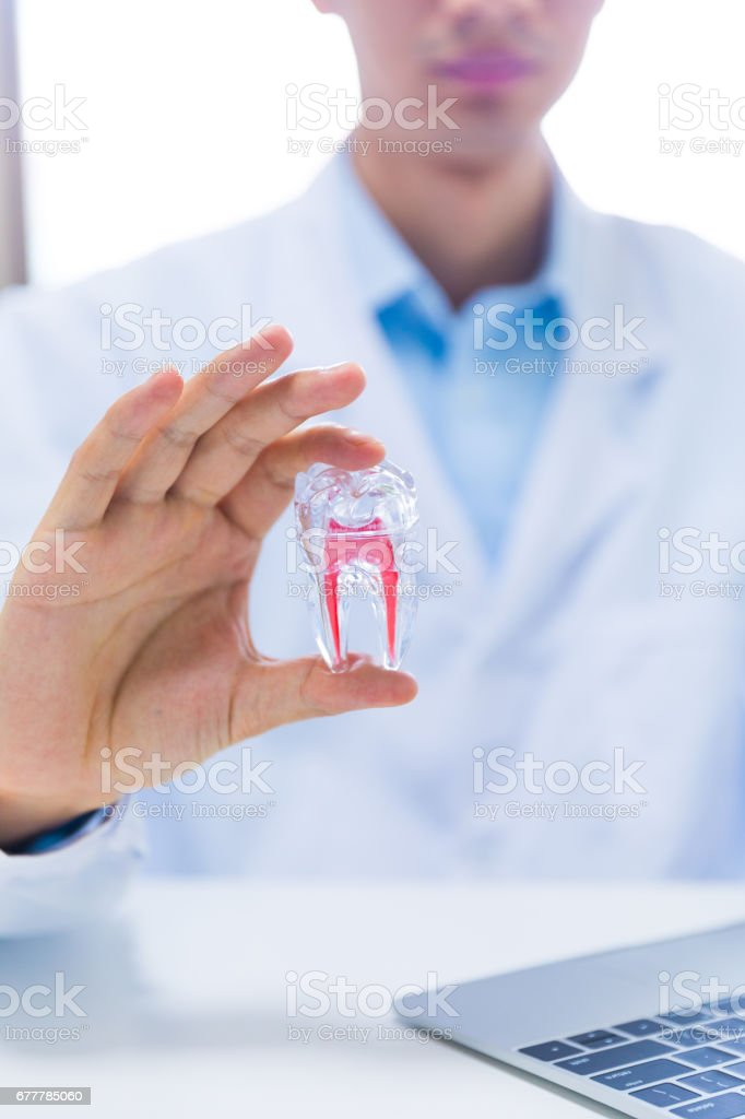 Doctor holding tooth model royalty-free stock photo