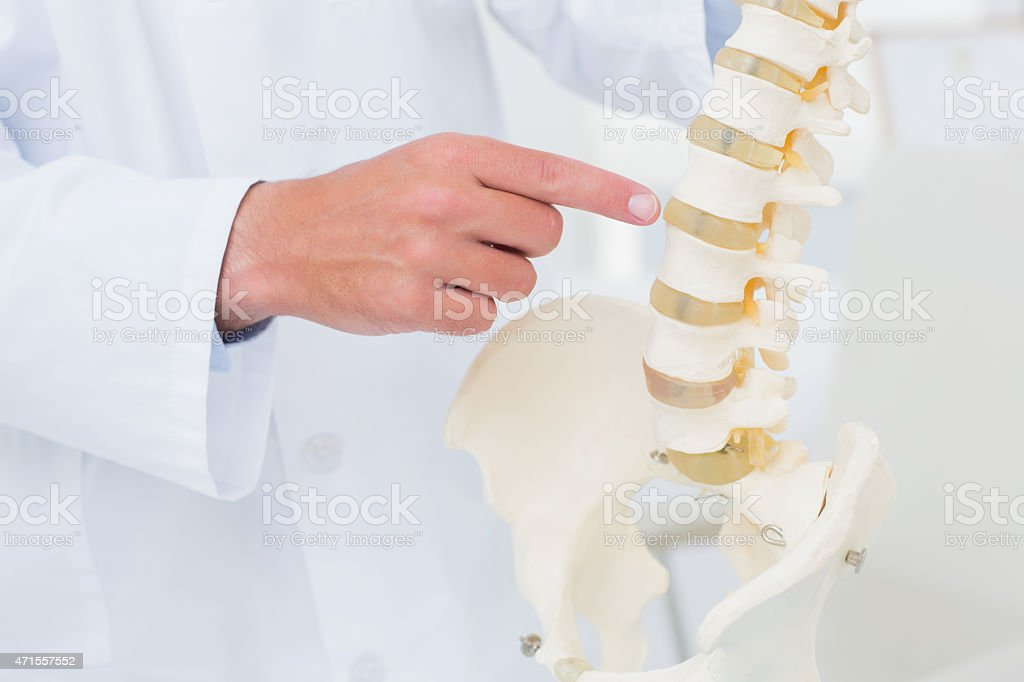 Doctor pointing at anatomical spine stock photo