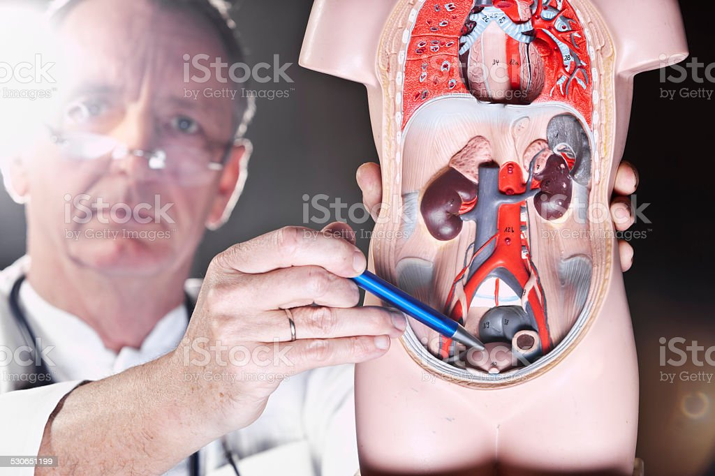 Doctor pointing at bladder stock photo