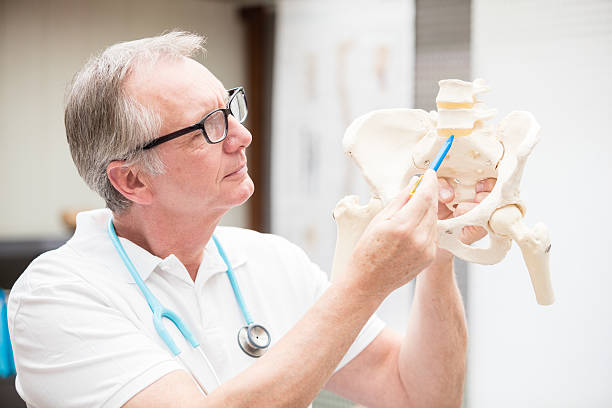 Doctor pointing at discus A mature doctor, pointing at the discus of the lumbar region of a plastic spine. XXXL size image. Image taken with Canon EOS 5 Ds and EF 70-200mm 2,8 USM L. sacrum stock pictures, royalty-free photos & images
