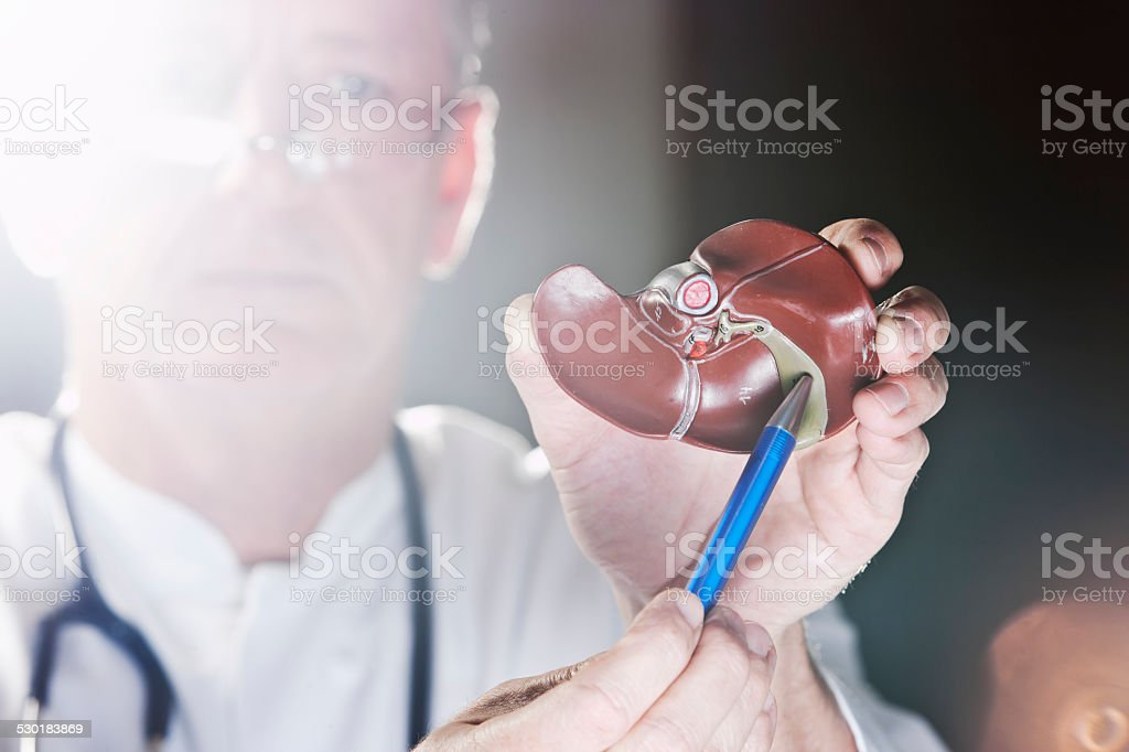 Doctor pointing at gall bladder stock photo