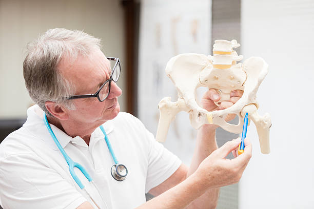 Doctor pointing at hip joint stock photo