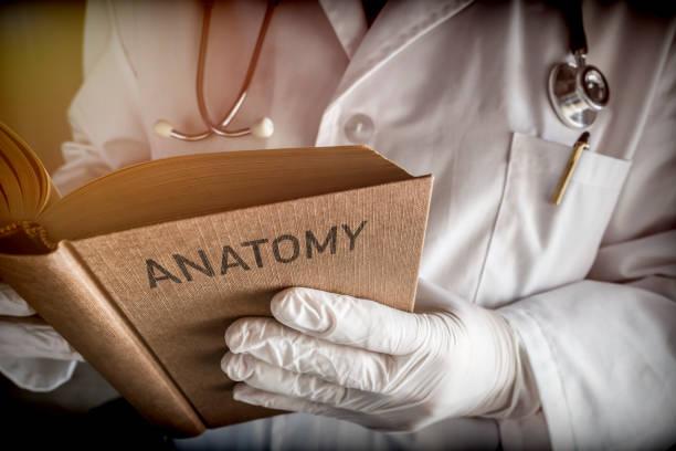 arzt lesung buchen der alten anatomie, konzeptbild - anatomie buch stock-fotos und bilder