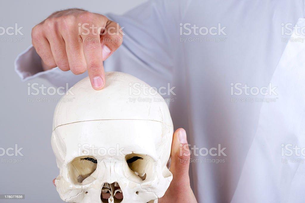 Arzt Zeigen Stirnbein Stock-Fotografie und mehr Bilder von Anatomie ...