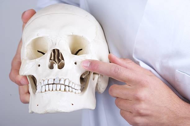 doctor showing infraorbital foramen stock photo
