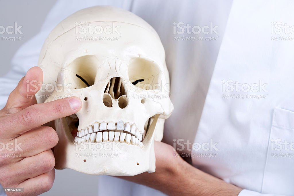 Doctor Showing Infraorbital Foramen Stock Photo Download Image Now Istock The lip of the infraorbital foramen can be detected readily as a bony ridge lying beneath the edge of the flat levator nasolabialis muscle. https www istockphoto com photo doctor showing infraorbital foramen gm178747481 24689685