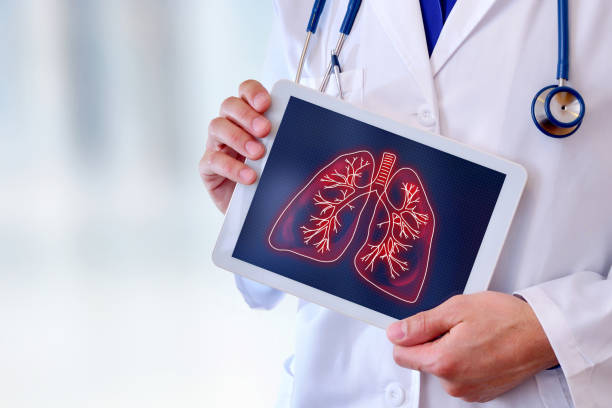 Doctor showing lungs on a table close up stock photo