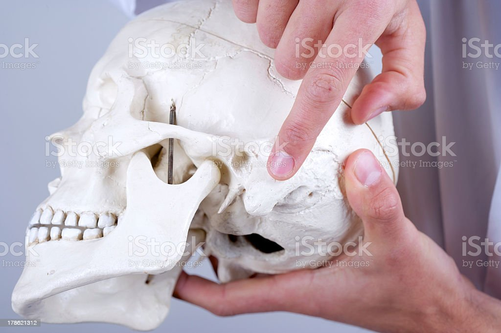 Doctor Showing Mastoid Process Stock Photo More Pictures Of