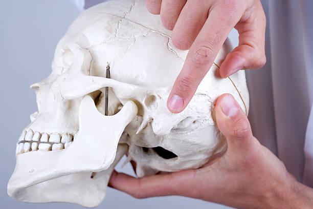 doctor showing mastoid process stock photo
