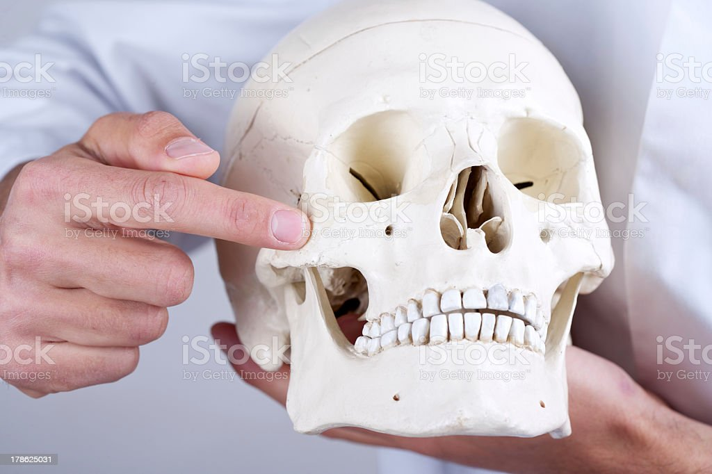 Doctor Showing Zygomatic Bone Stock Photo & More Pictures of Anatomy ...