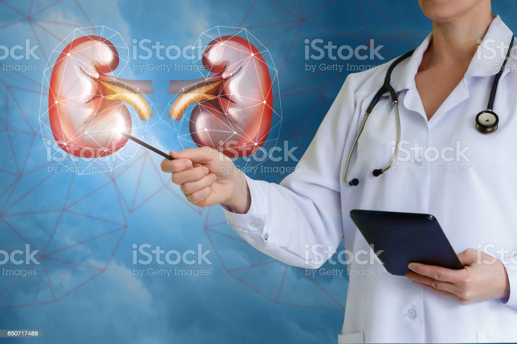 Doctor shows buds . stock photo