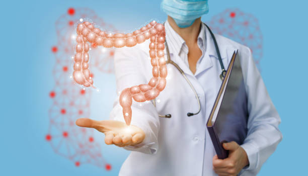 doctor shows colon . - human intestine stock photos and pictures