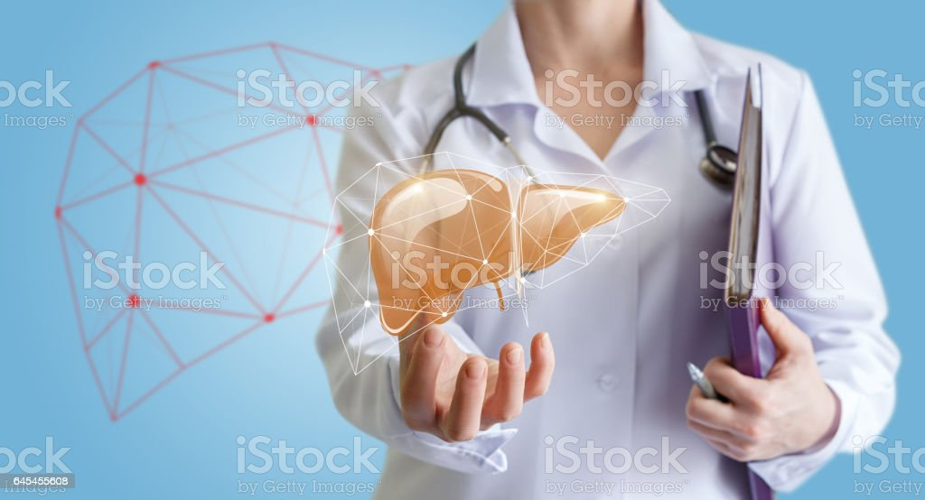 Doctor shows human liver. stock photo