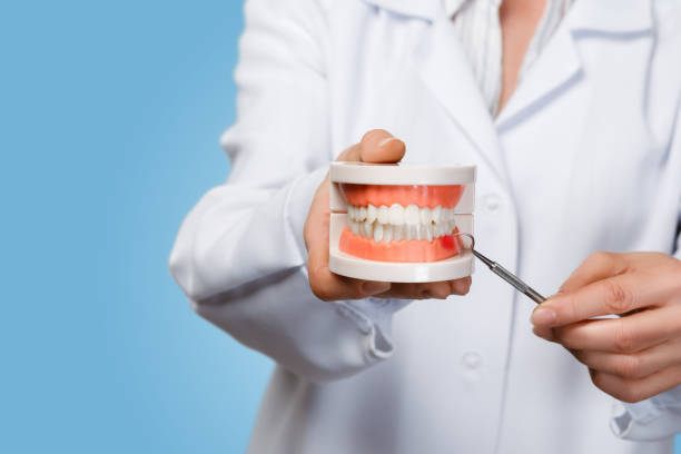 Doctor shows the problem with the gums on the tooths model. stock photo
