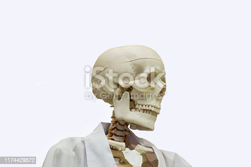 Doctor Skeleton in white background