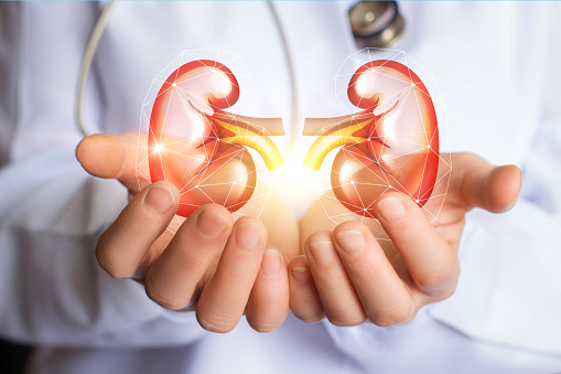Doctor Supports Kidneys Healthy Stock Photo - Download Image Now