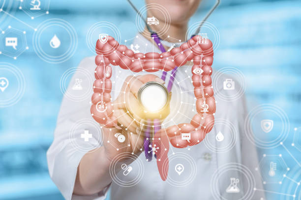 A doctor touching the medical system structure with the intestines model with a stethoscope. stock photo