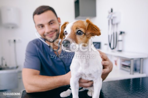 doctor using stethoscope on a healthy puppy