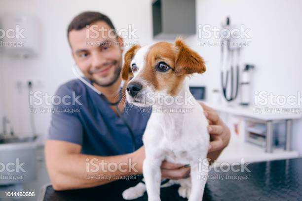 Doctor using stethoscope on a puppy picture id1044460686?b=1&k=6&m=1044460686&s=612x612&h=19dglgy3jbyl3tpfeialkda8xo0hibffb klbyzljcc=