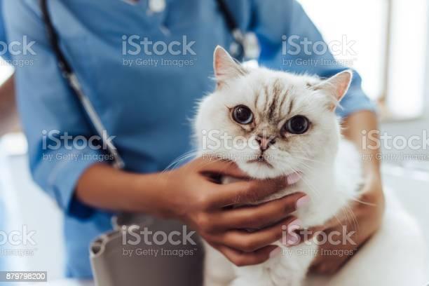 Doctor veterinarian at clinic picture id879798200?b=1&k=6&m=879798200&s=612x612&h=miljk7l90sei2qj4lmrdhtbsln xmwhpisiskuryj08=