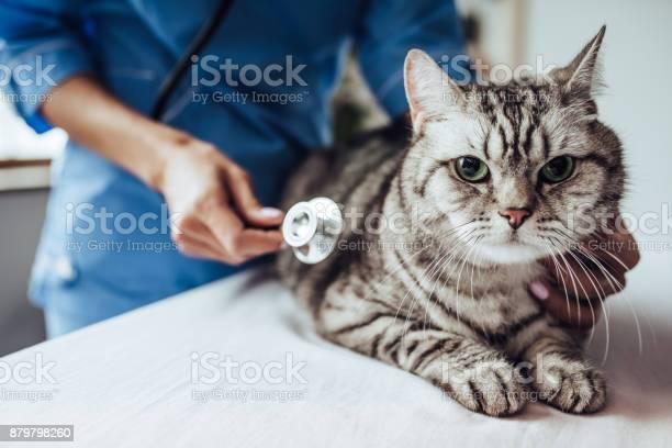 Doctor veterinarian at clinic picture id879798260?b=1&k=6&m=879798260&s=612x612&h=o1pzzoif2sasg5hpyfiquutt4gzzj3vw l4kdmhyjfq=