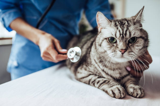 Doctor veterinarian at clinic. stock photo