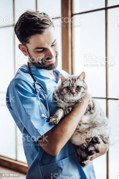 Doctor veterinarian at clinic picture id879798432?b=1&k=6&m=879798432&s=612x612&h=e qxubdvvthzqrzjlhka vfsv9lnshns1mogeyl5dhs=