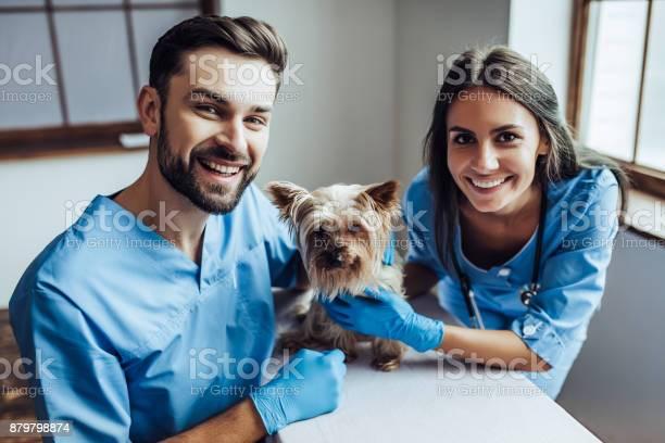 Doctor veterinarian at clinic picture id879798874?b=1&k=6&m=879798874&s=612x612&h=ksypwk2lnkddko88iqq61f1g43wznyp ogsp3mbgqd8=