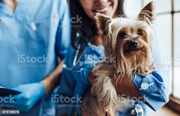 Doctor veterinarian at clinic picture id879798878?b=1&k=6&m=879798878&s=612x612&h=w4wdgi6dqoivic6zb8ji1ekixvckawhi jcu41qk1uk=