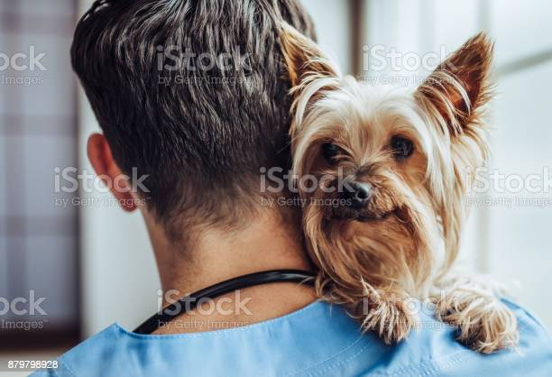 Doctor veterinarian at clinic picture id879798928?b=1&k=6&m=879798928&s=612x612&h=yrsszod9ccsqq30rcvqt a9d6wvktlqmabkw0ok7dke=