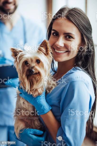 Doctor veterinarian at clinic picture id879798934?b=1&k=6&m=879798934&s=612x612&h=hstv 179juni8jlzomprfzipude2sjdt1 tbcbdabdc=