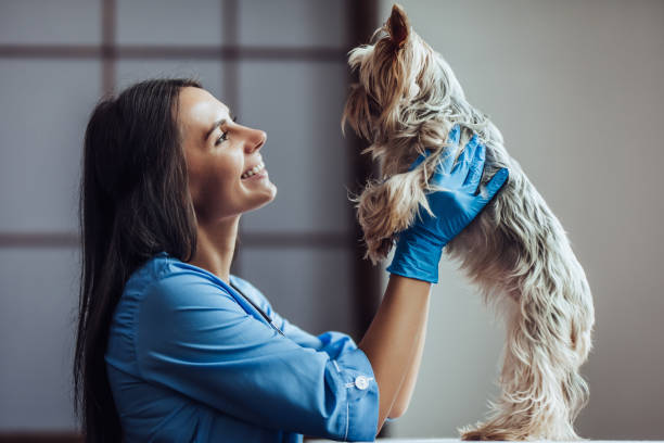 doctor veterinarian at clinic. - veterinarian stock photos and pictures