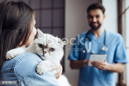 istock Doctor veterinarian at clinic. 879799122