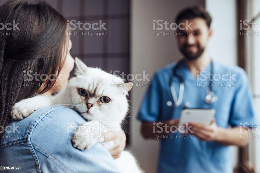 Médico veterinario en la clínica. - foto de stock